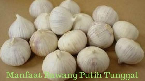 manfaat bawang putih tunggal lanang bagi kesehatan